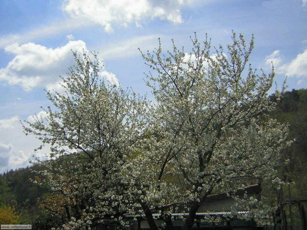 stagione_primavera 13