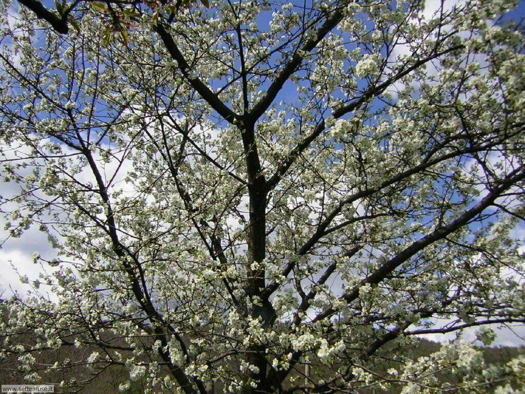 stagione_primavera 14