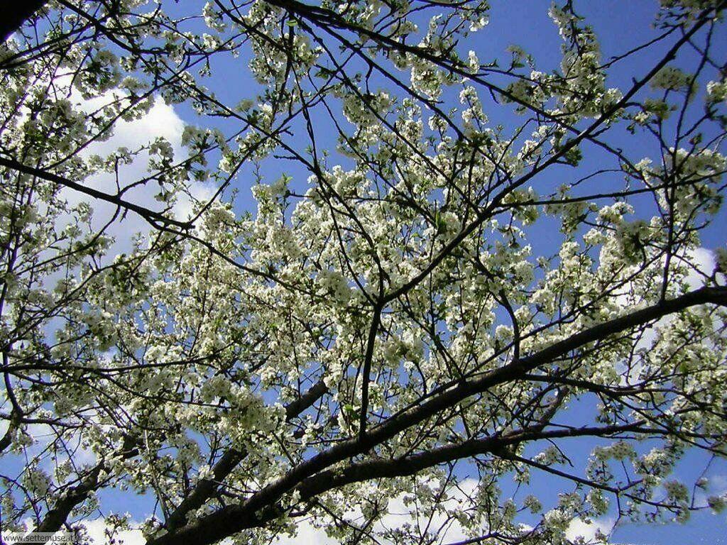 stagione_primavera 15