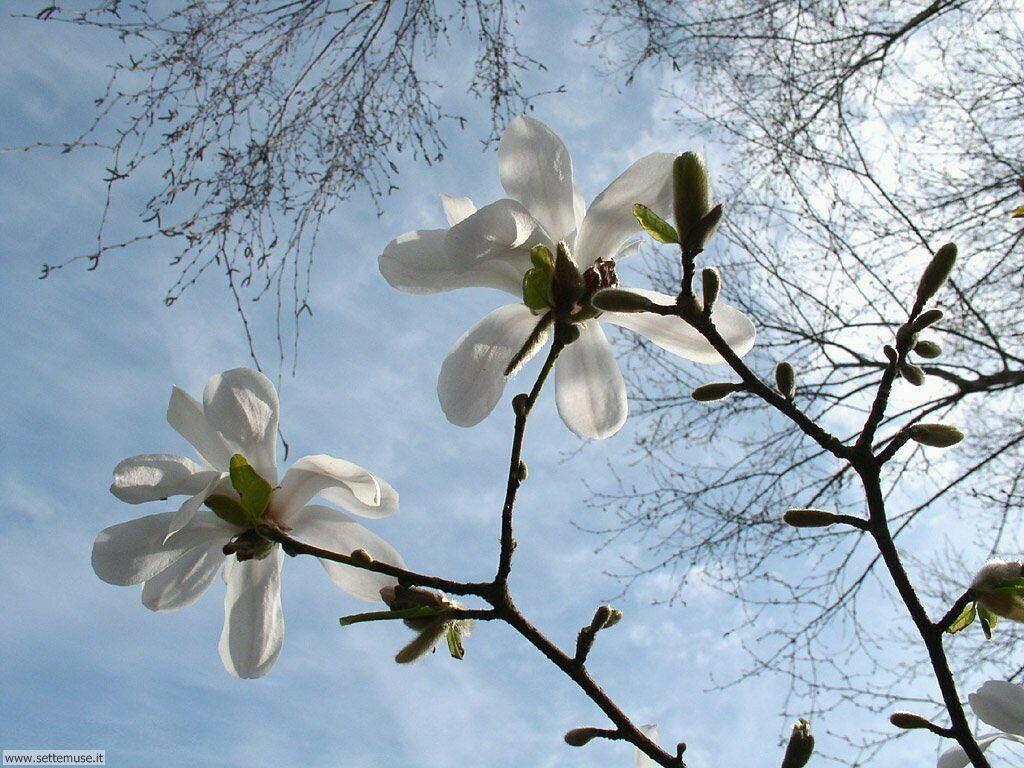 stagione_primavera 16