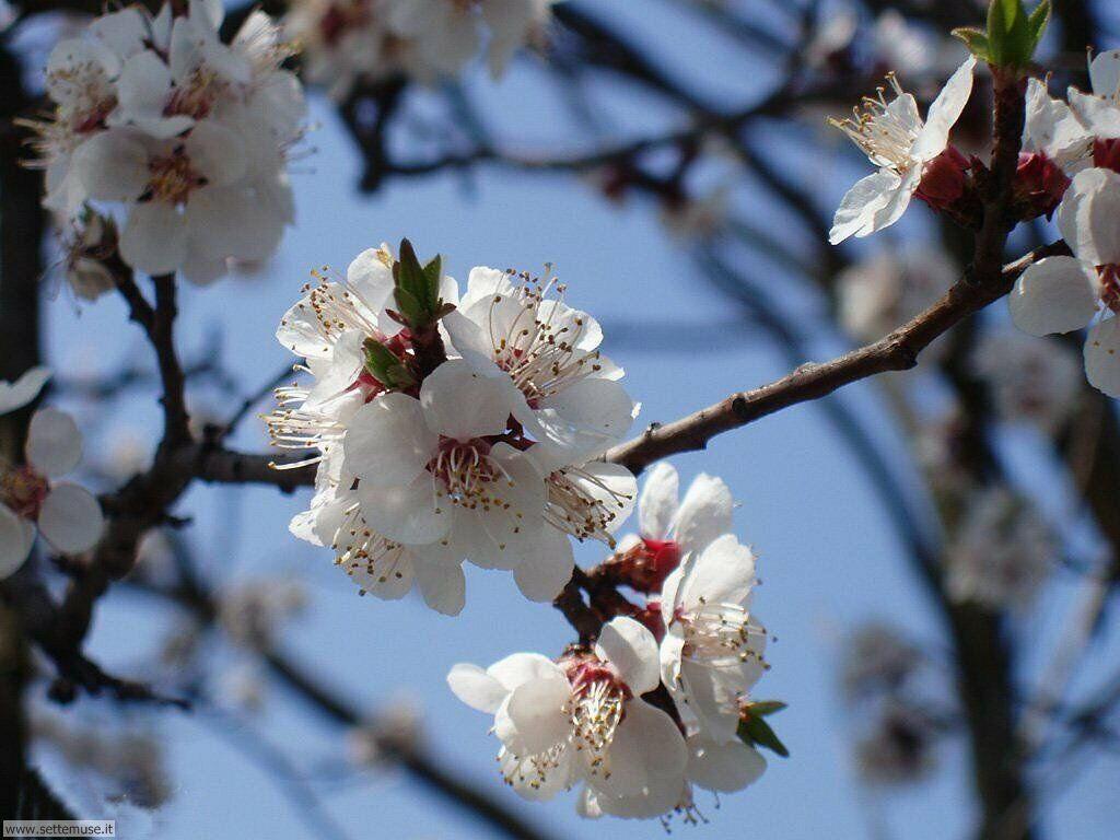 stagione_primavera 17