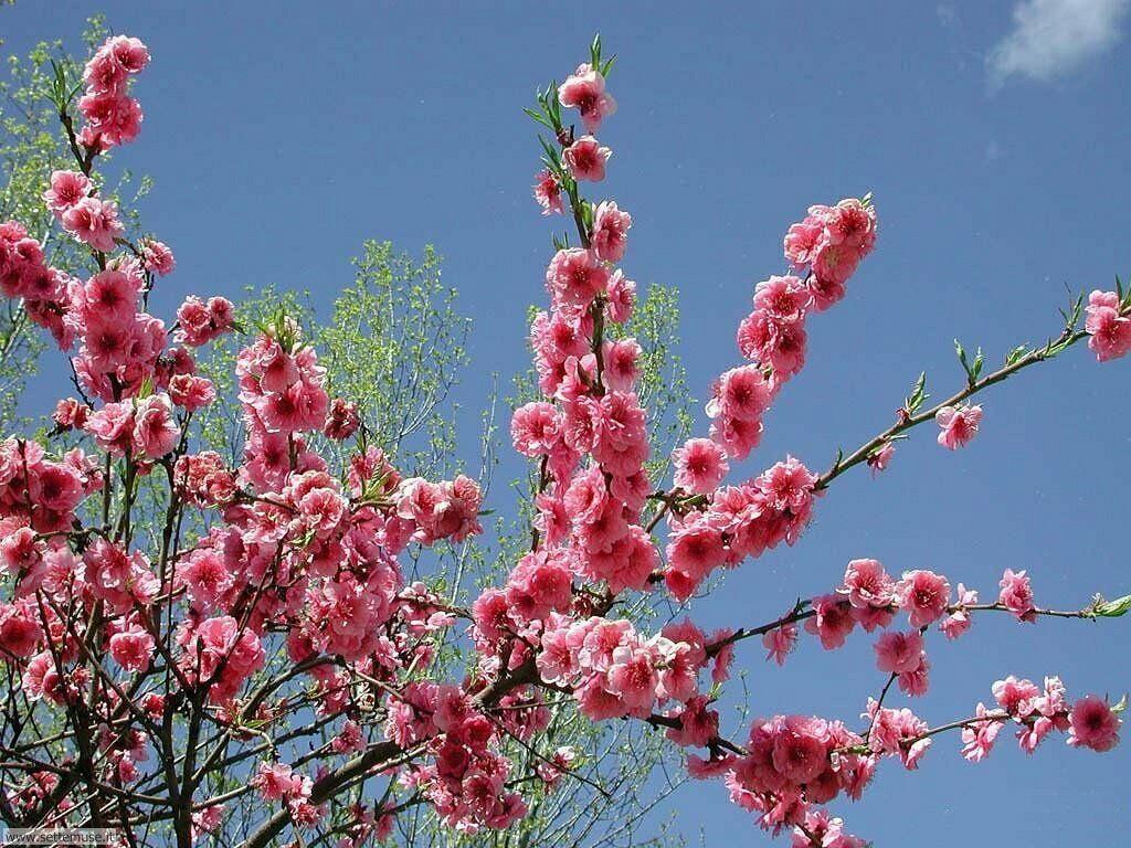 stagione_primavera 18