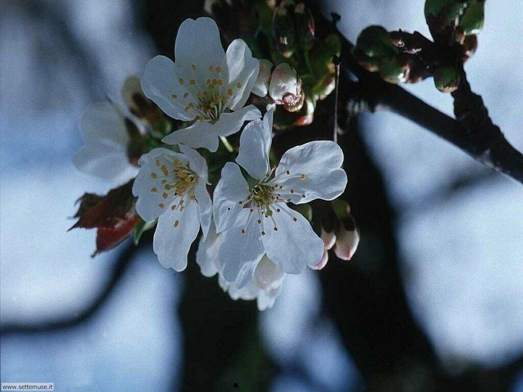 stagione_primavera 20