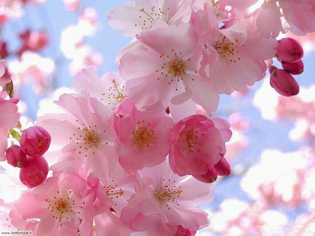 stagione_primavera 22