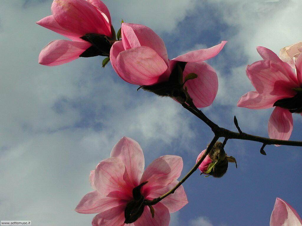 stagione_primavera 23