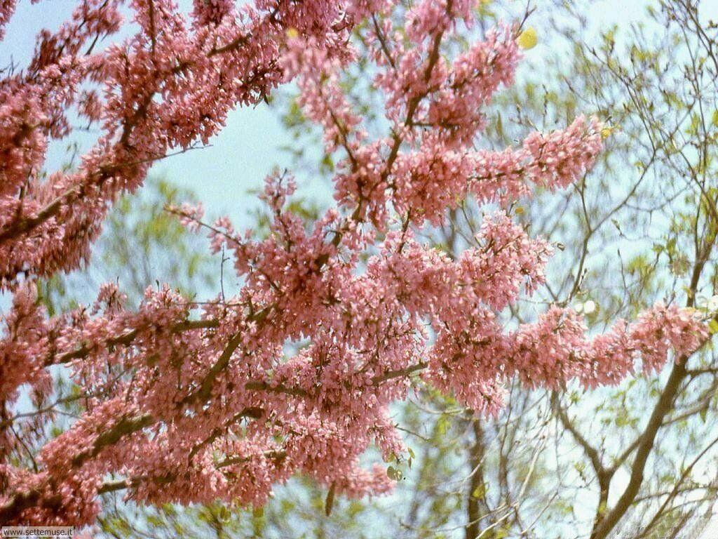 stagione_primavera 24