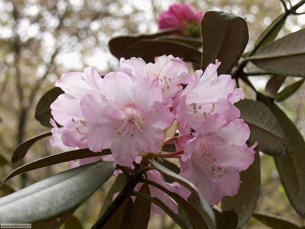 stagione_primavera 27
