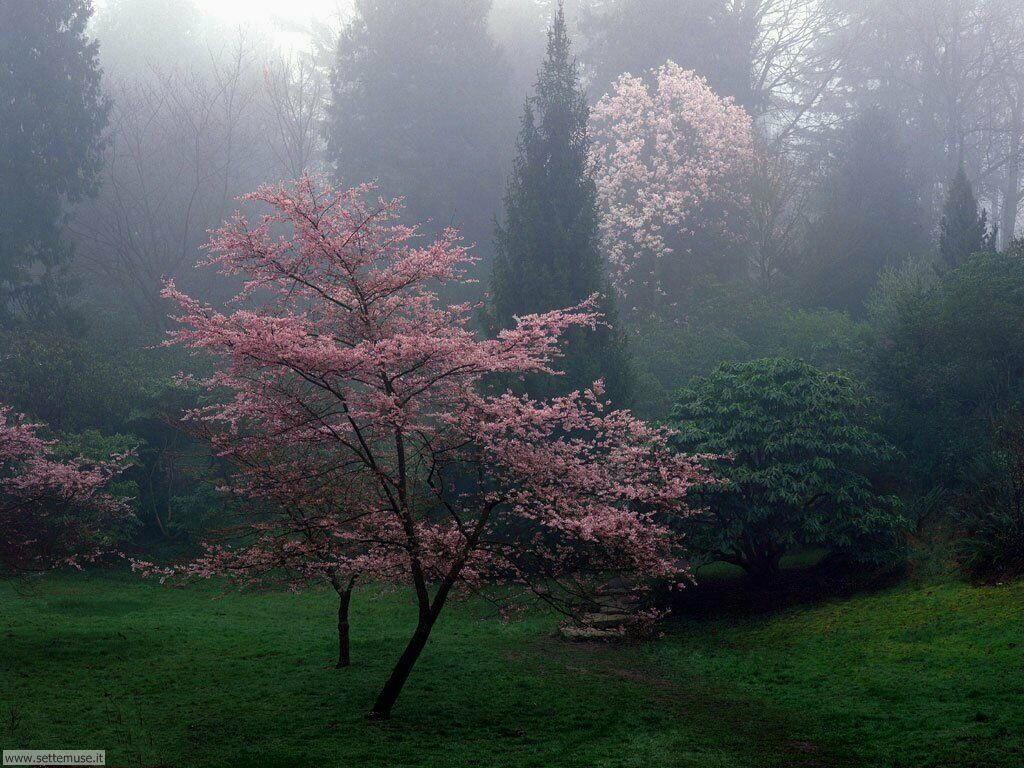 stagione_primavera 28