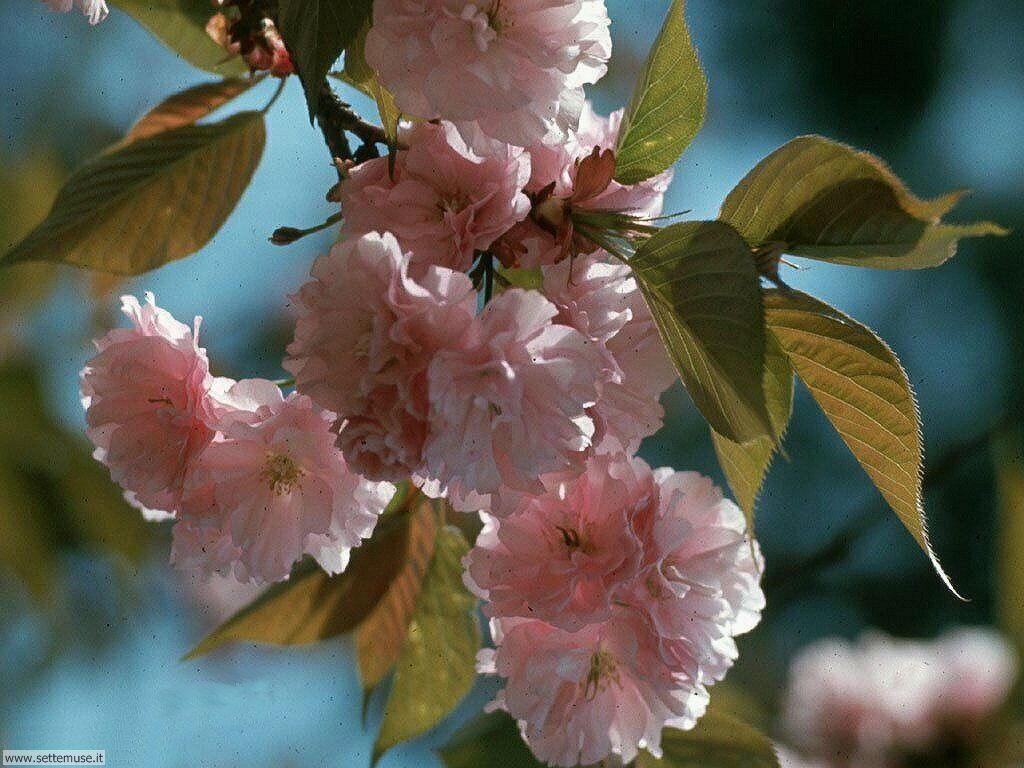 stagione_primavera 29