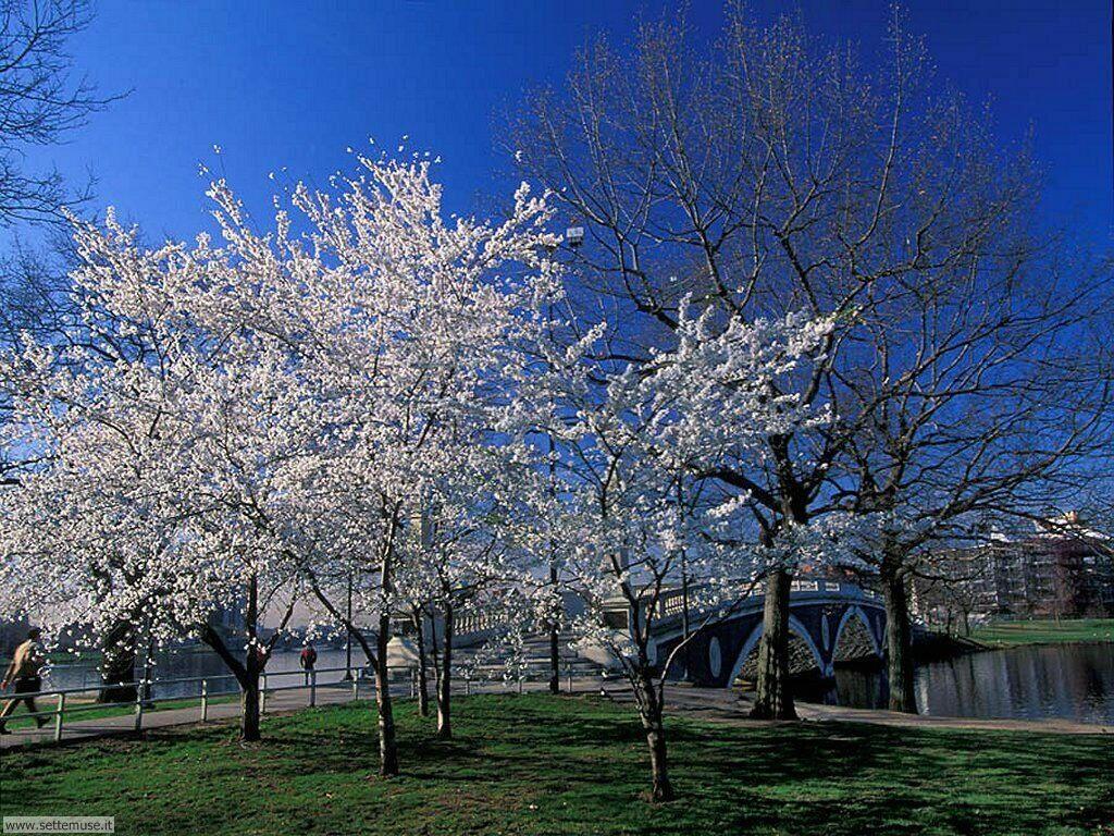 Foto desktop della stagione primavera 031