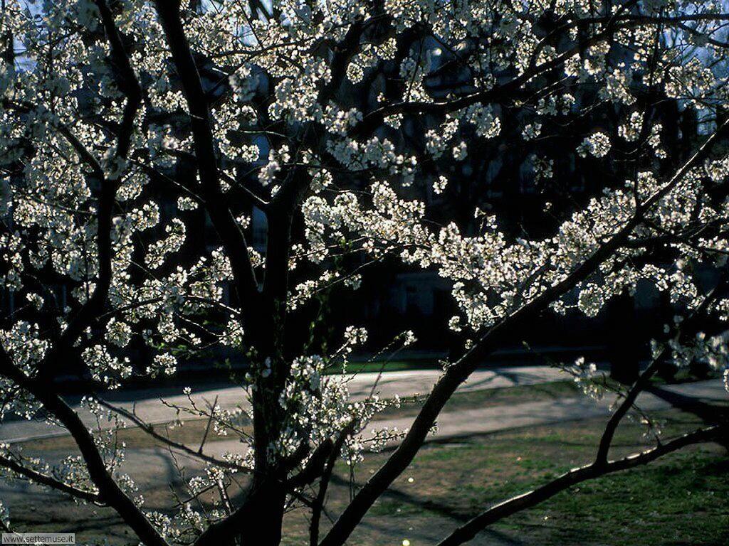 Foto desktop della stagione primavera 032