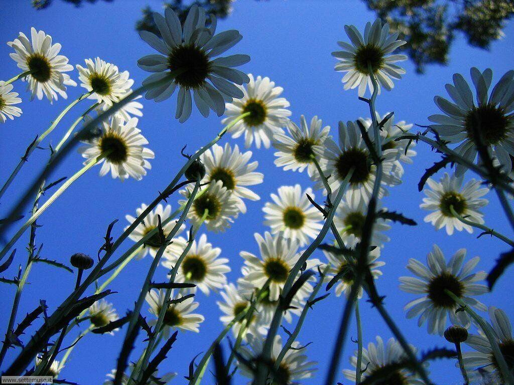Foto desktop della stagione primavera 034
