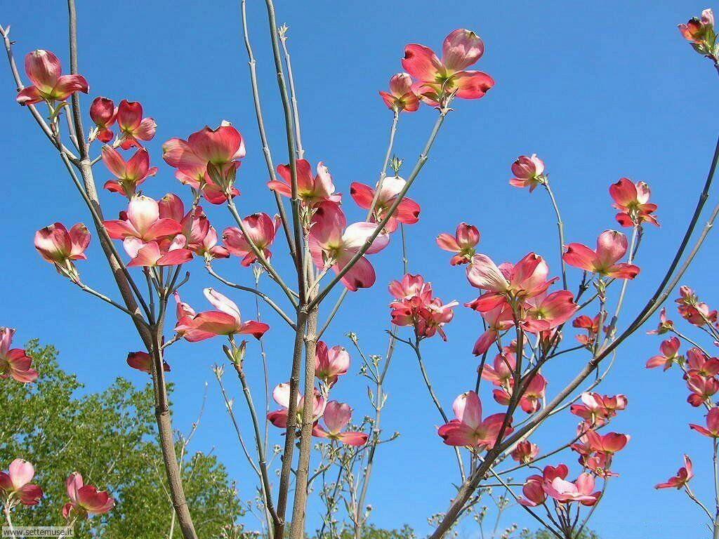 Foto primavera per sfondi desktop for Immagini sfondo desktop primavera