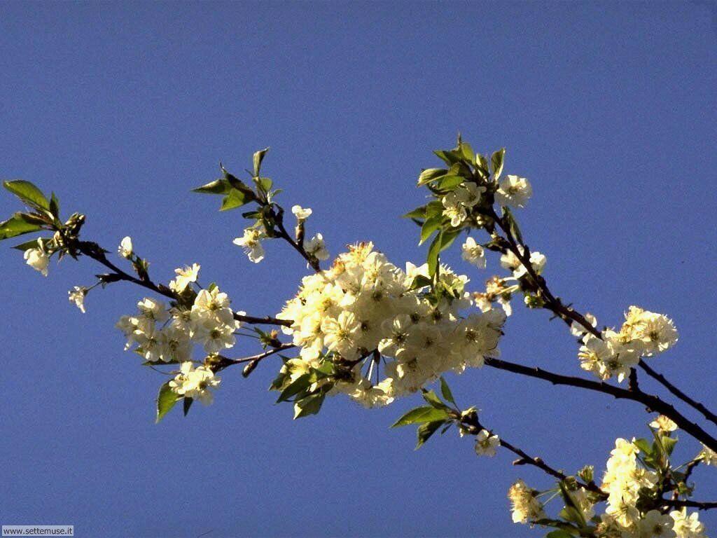 Foto desktop della stagione primavera 036