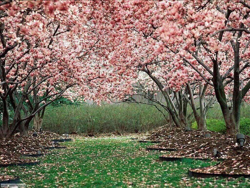Foto desktop della stagione primavera 037