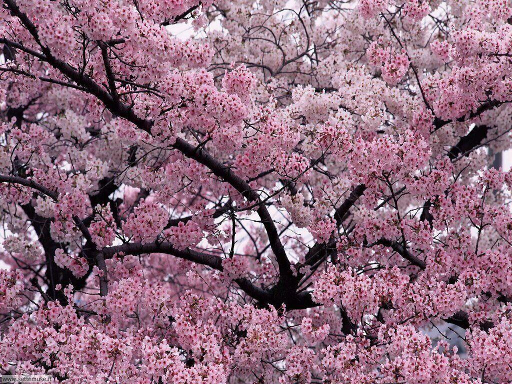 Foto desktop della stagione primavera 038
