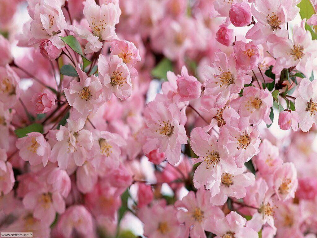 Foto desktop della stagione primavera 039