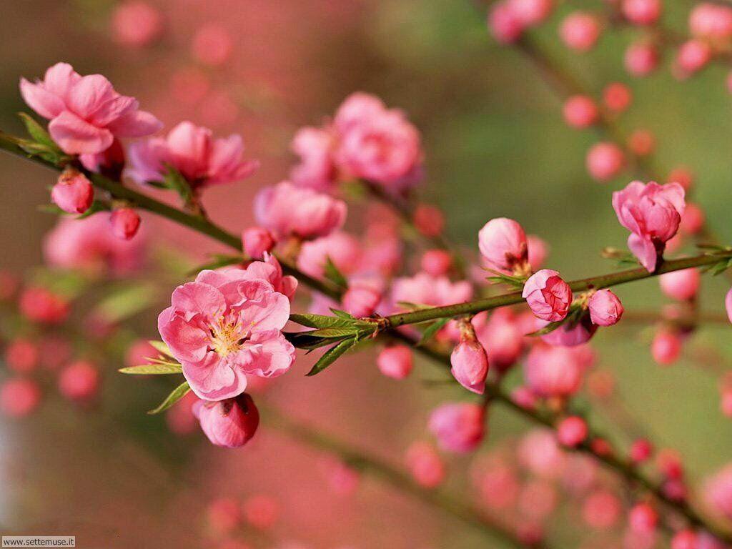 Foto desktop della stagione primavera 040