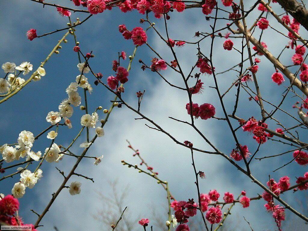 Foto desktop della stagione primavera 041