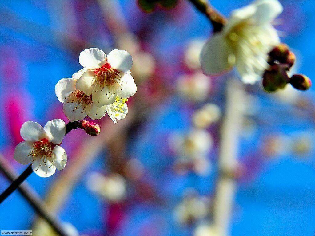 Foto desktop della stagione primavera 042