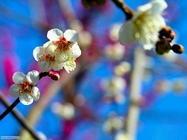 Foto desktop della stagione primavera