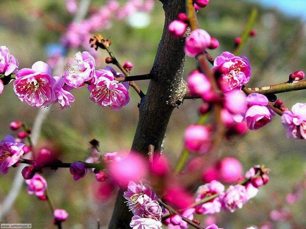 Foto desktop della stagione primavera 043