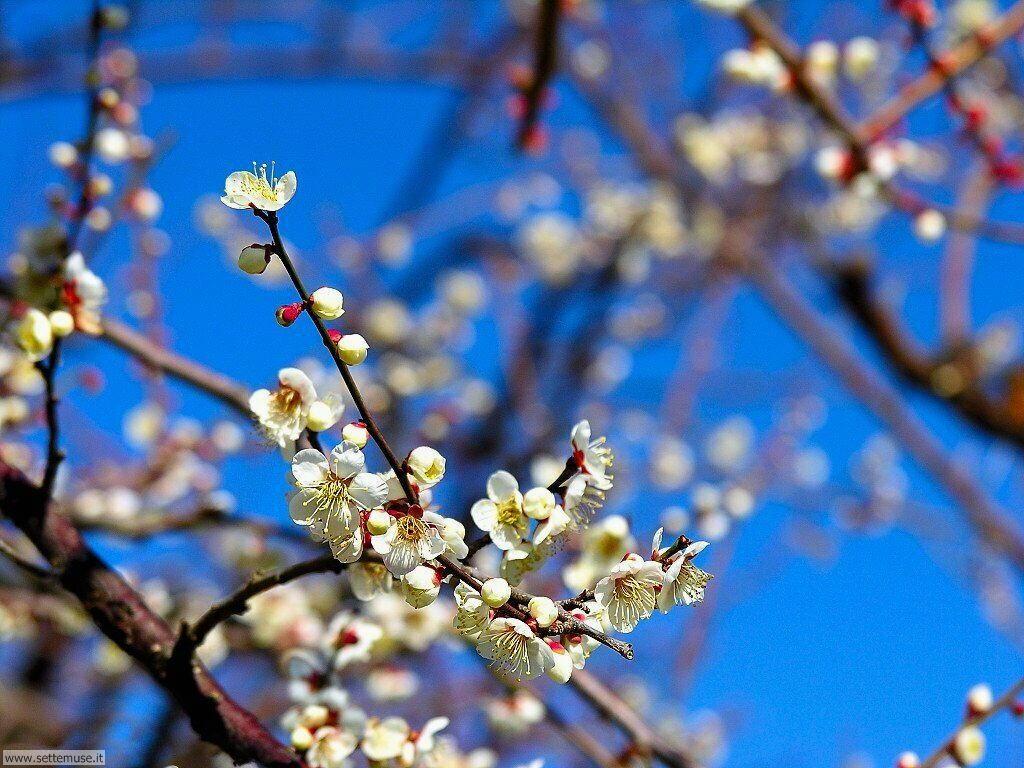Foto desktop della stagione primavera 044