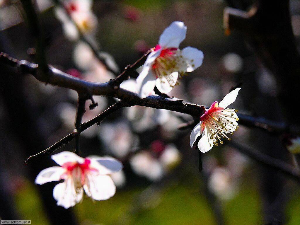 Foto desktop della stagione primavera 046