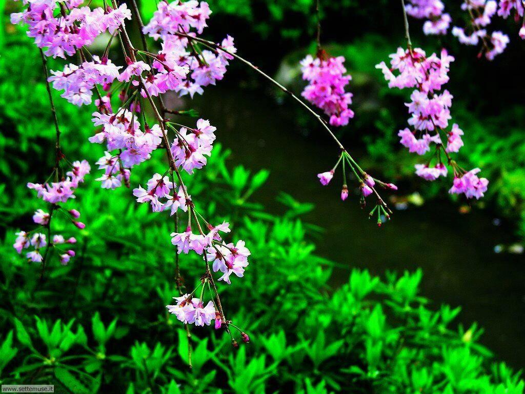 Foto desktop della stagione primavera 047