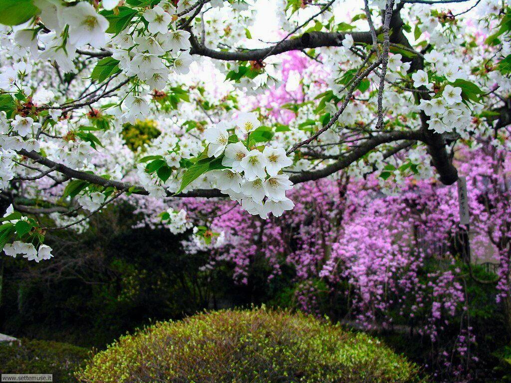 Foto desktop della stagione primavera 049