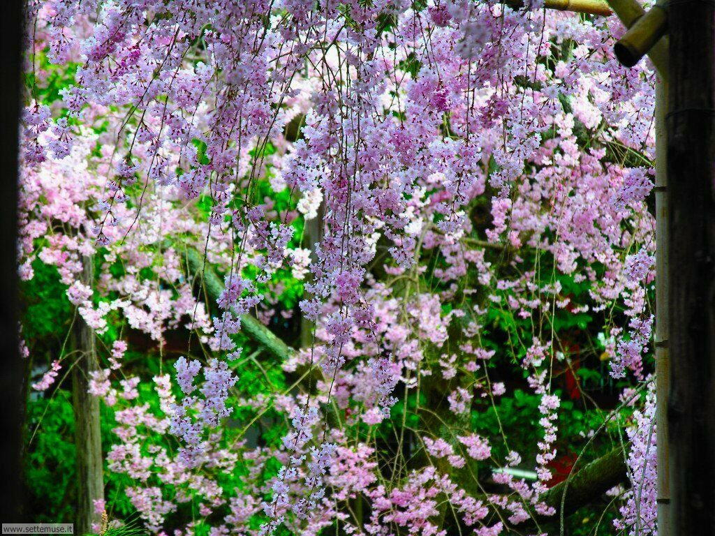 Foto desktop della stagione primavera 050