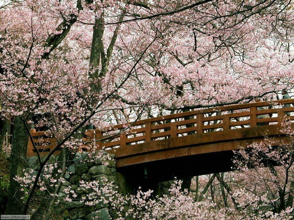 Foto desktop della stagione primavera 051
