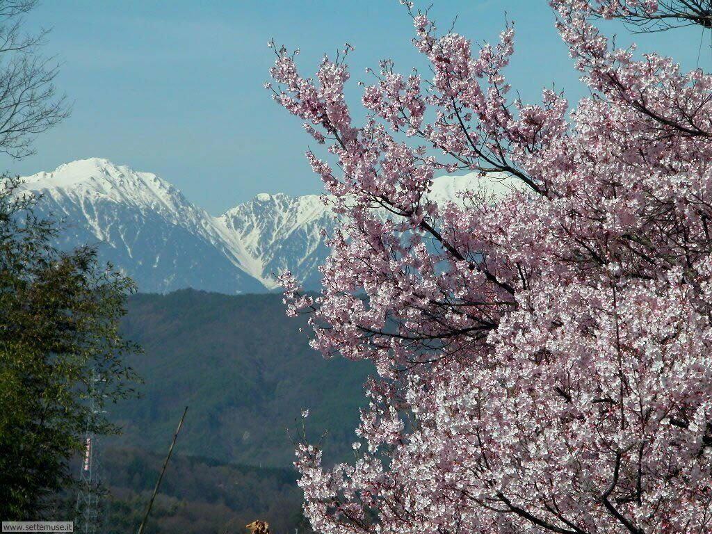Foto desktop della stagione primavera 052