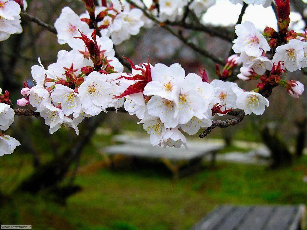 Foto desktop della stagione primavera 053