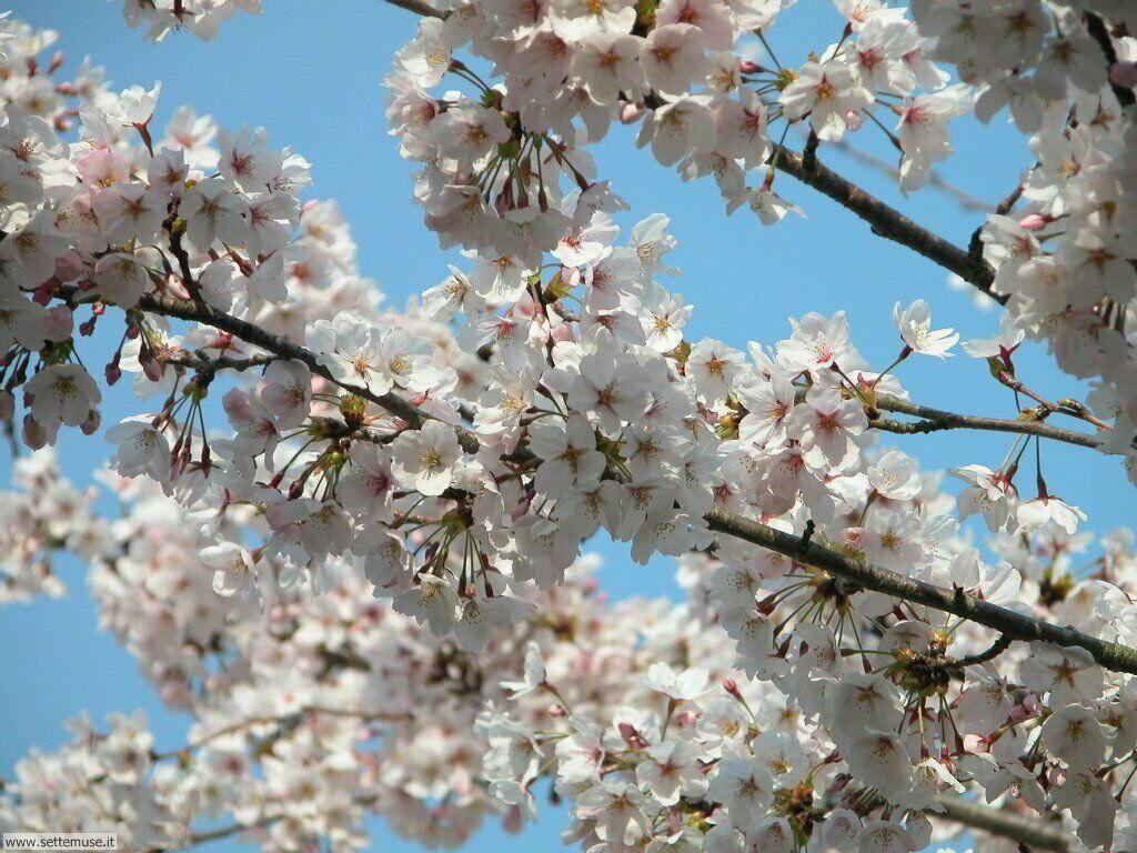 Foto desktop della stagione primavera 055