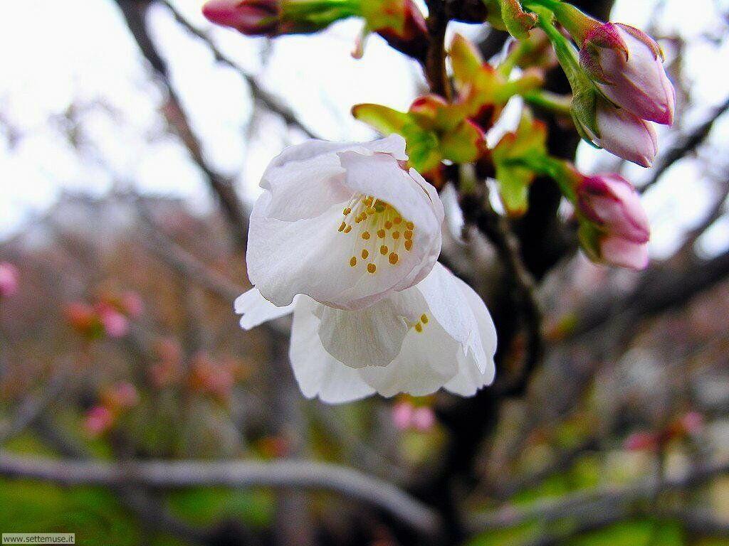 Foto desktop della stagione primavera 056