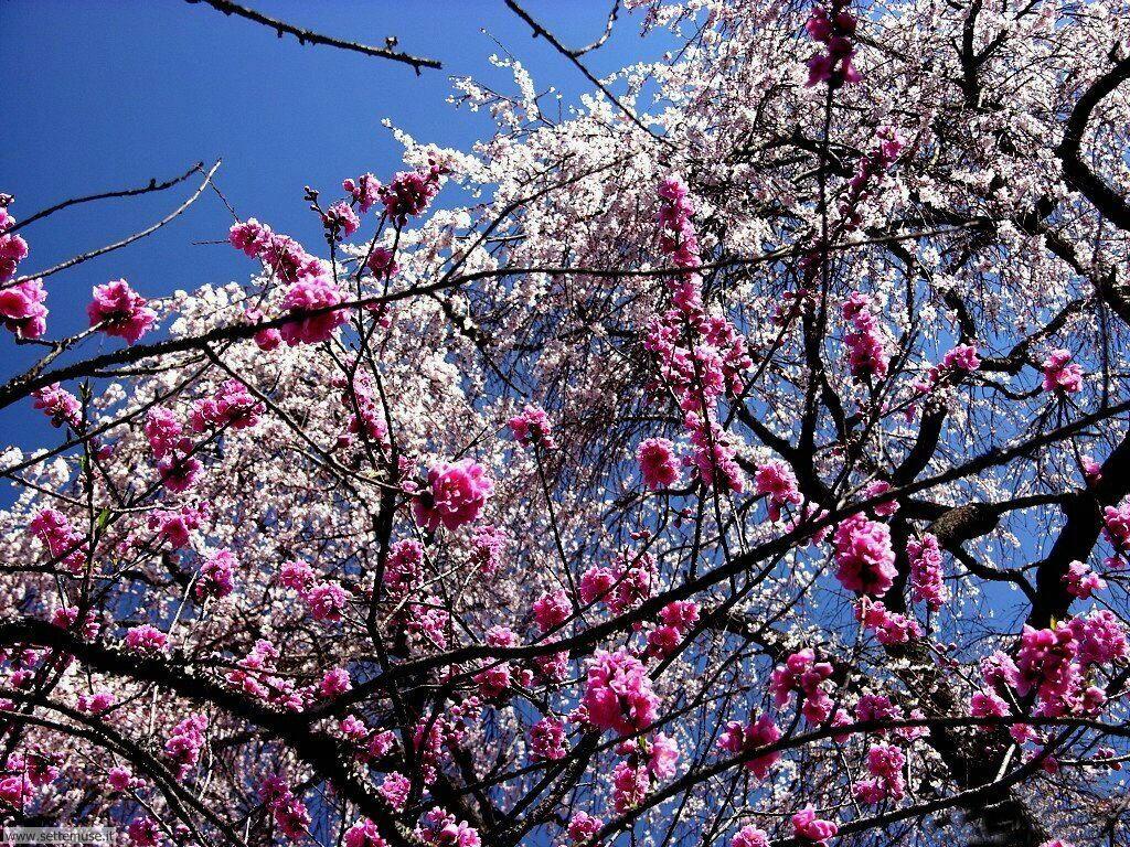 Foto desktop della stagione primavera 057