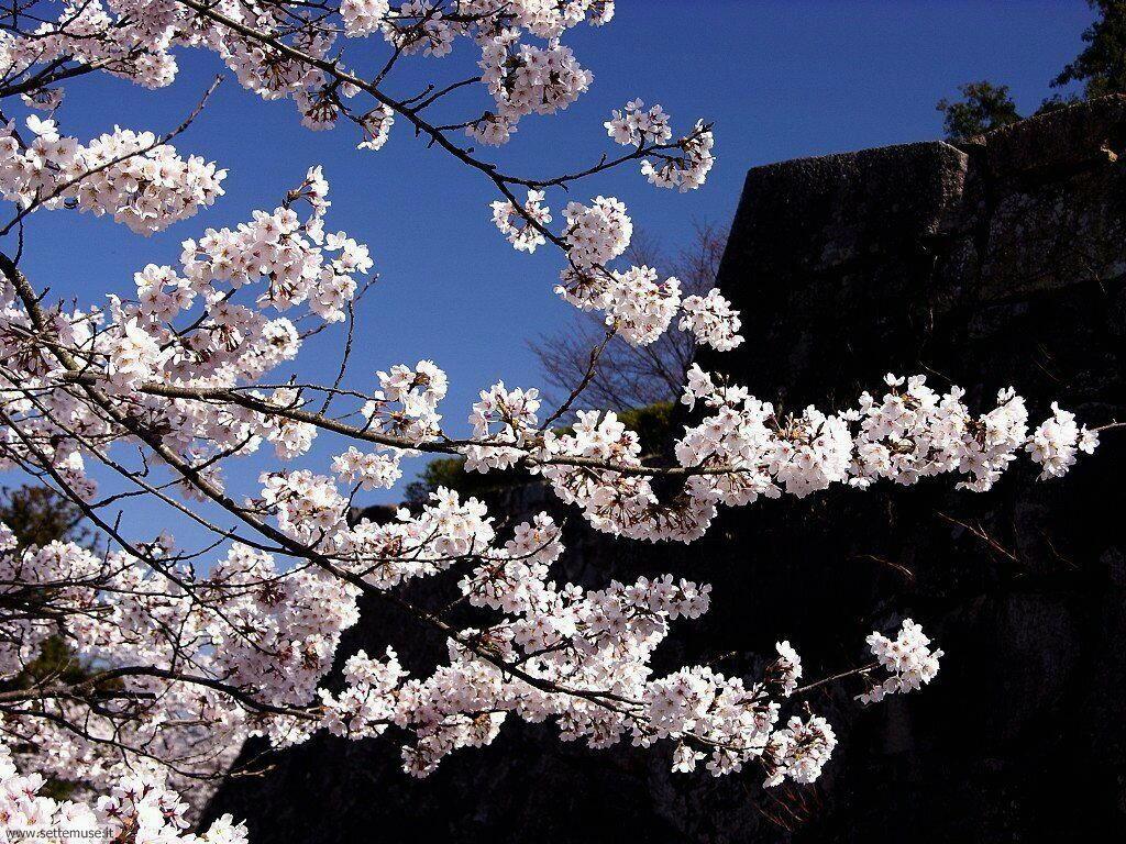Foto desktop della stagione primavera 058