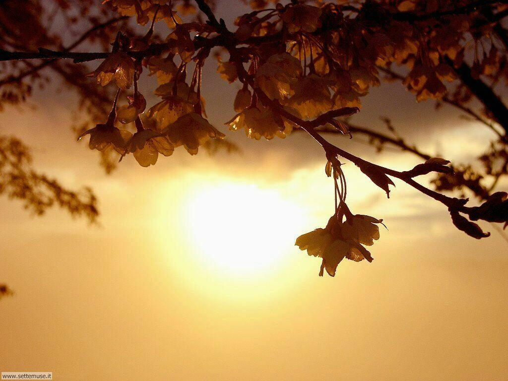 Foto desktop della stagione primavera 059