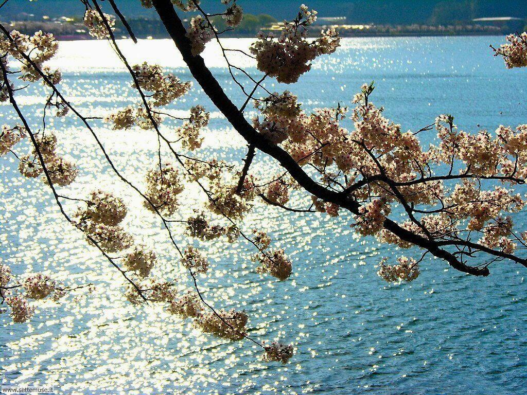 Foto desktop della stagione primavera 060