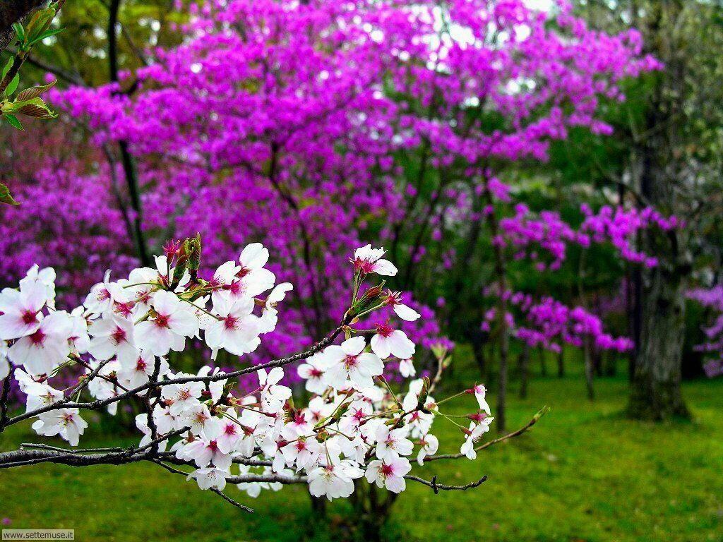 Foto Primavera Per Sfondi Desktop Settemuse It