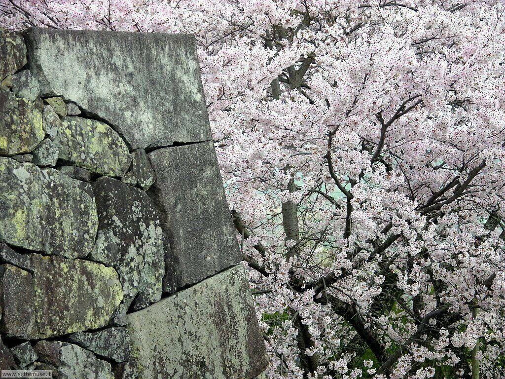 Foto desktop della stagione primavera 063