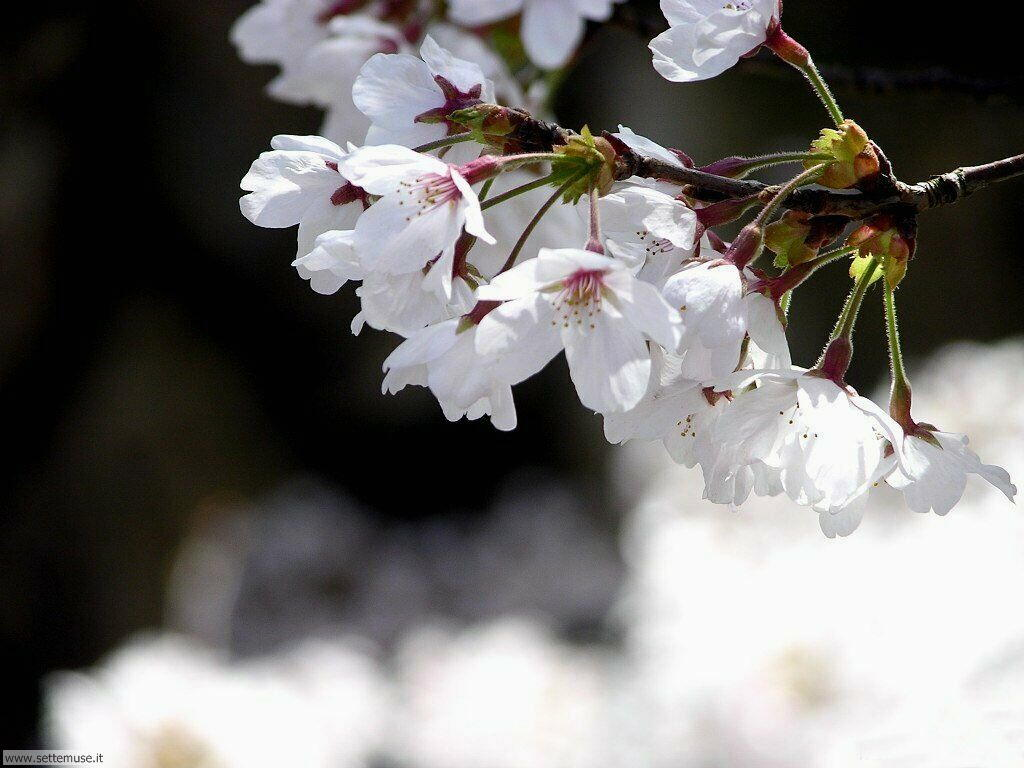 Foto desktop della stagione primavera 064
