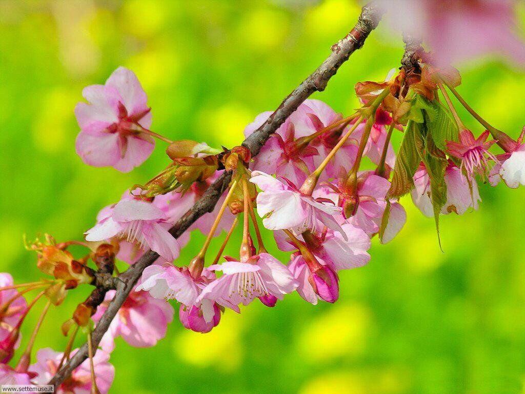 Foto desktop della stagione primavera 067