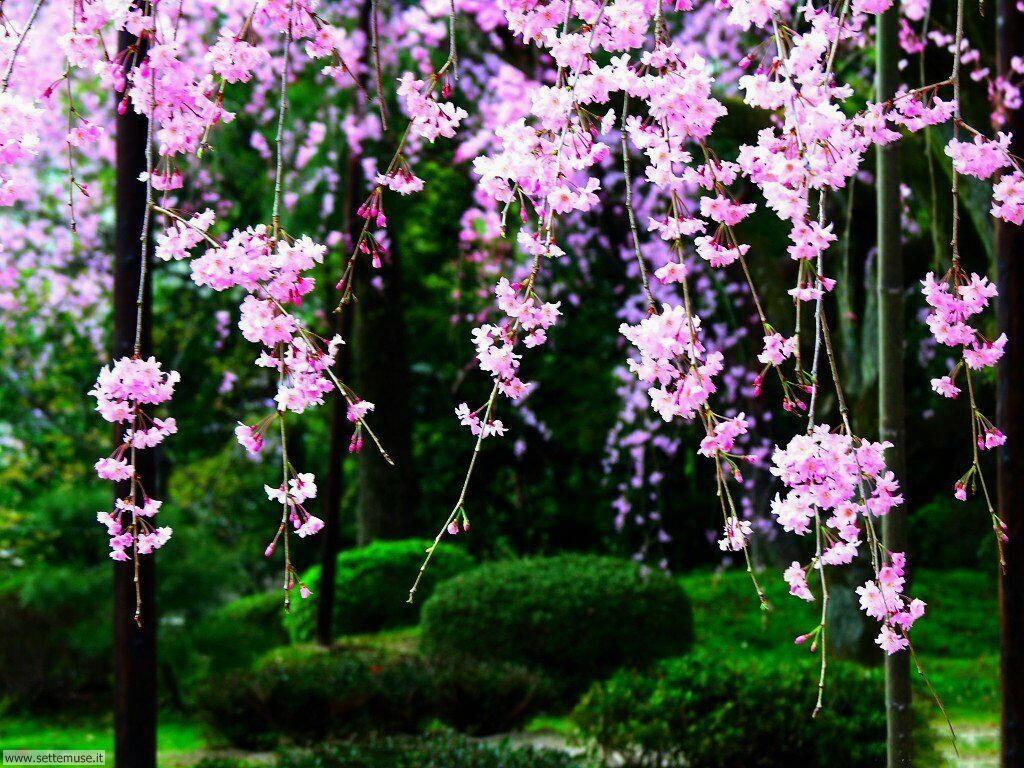 Foto desktop della stagione primavera 068