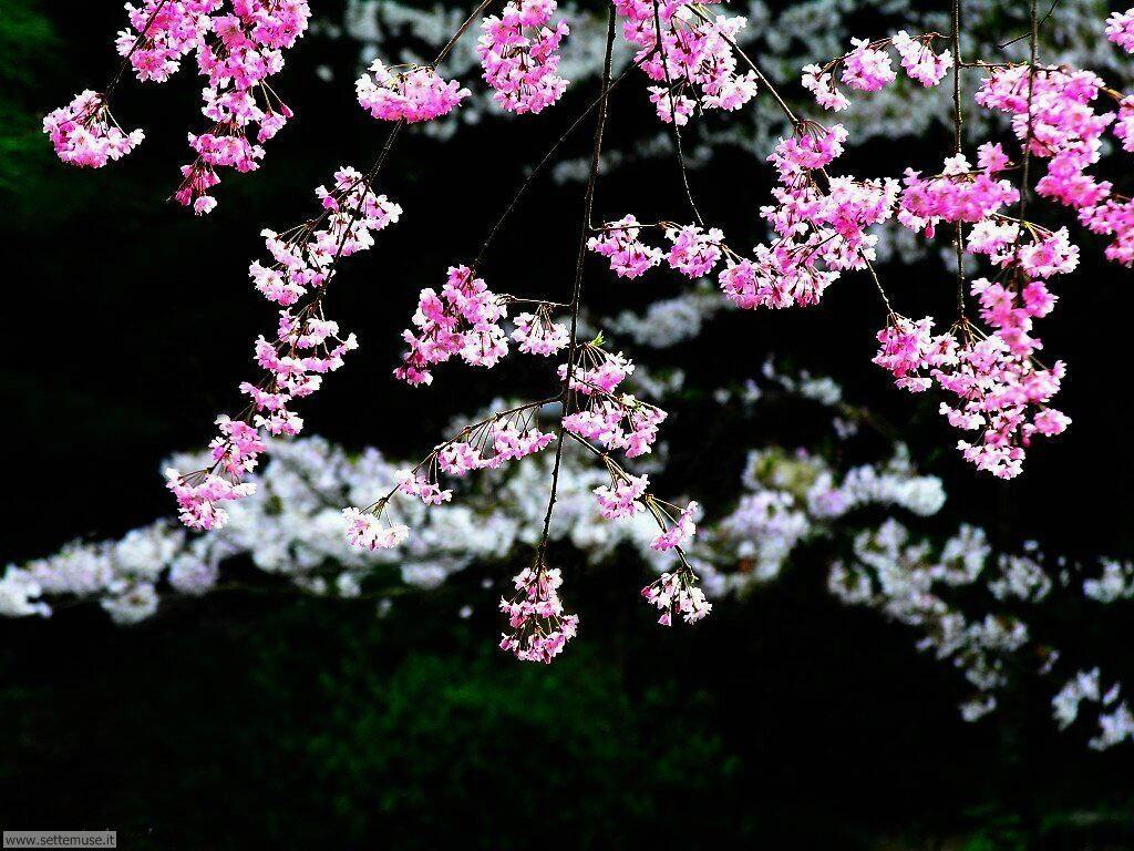 Foto desktop della stagione primavera 069