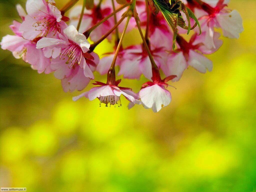 Foto desktop della stagione primavera 071