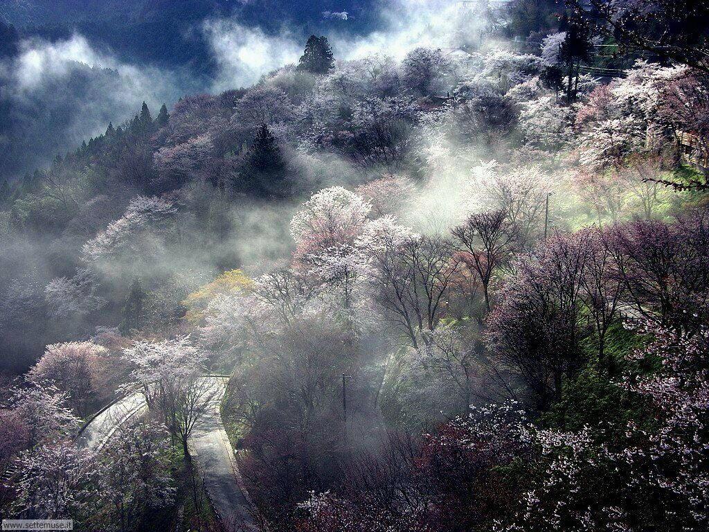 Foto desktop della stagione primavera 072