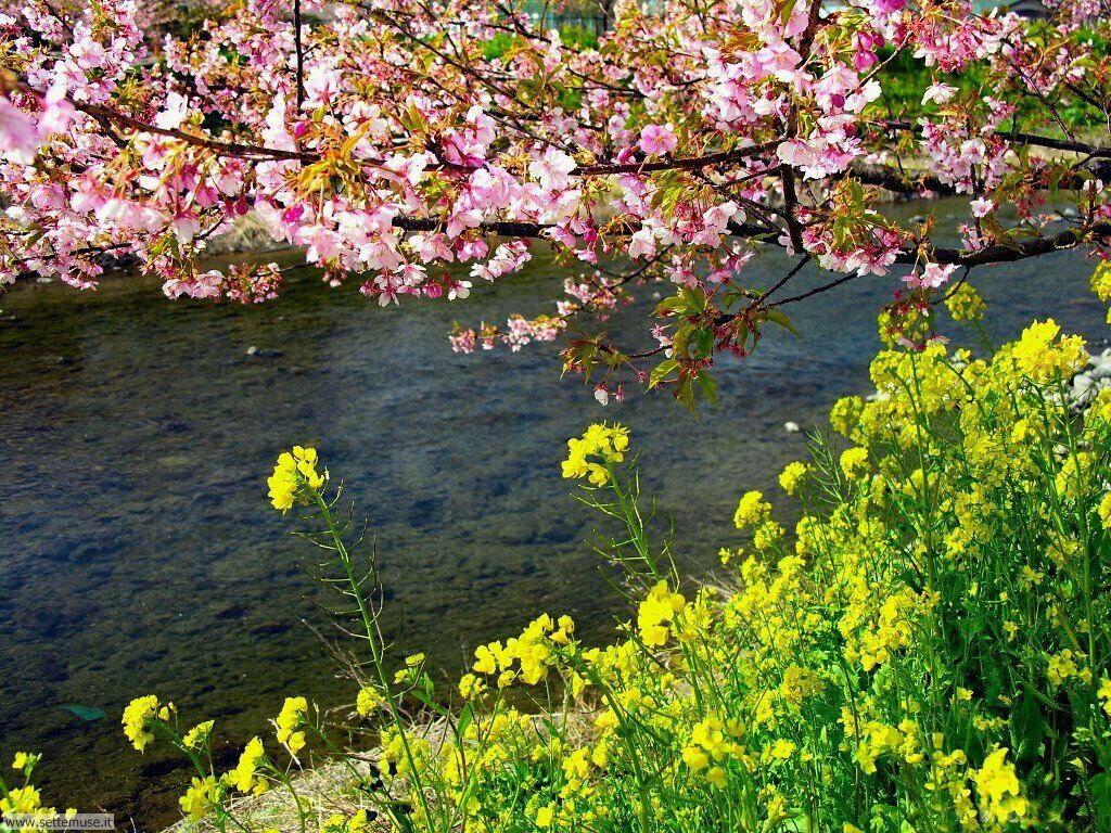 Foto desktop della stagione primavera 074