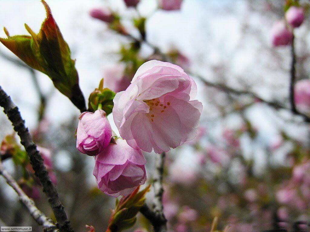 Foto desktop della stagione primavera 075